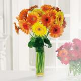 Picture of Gerbera Garden